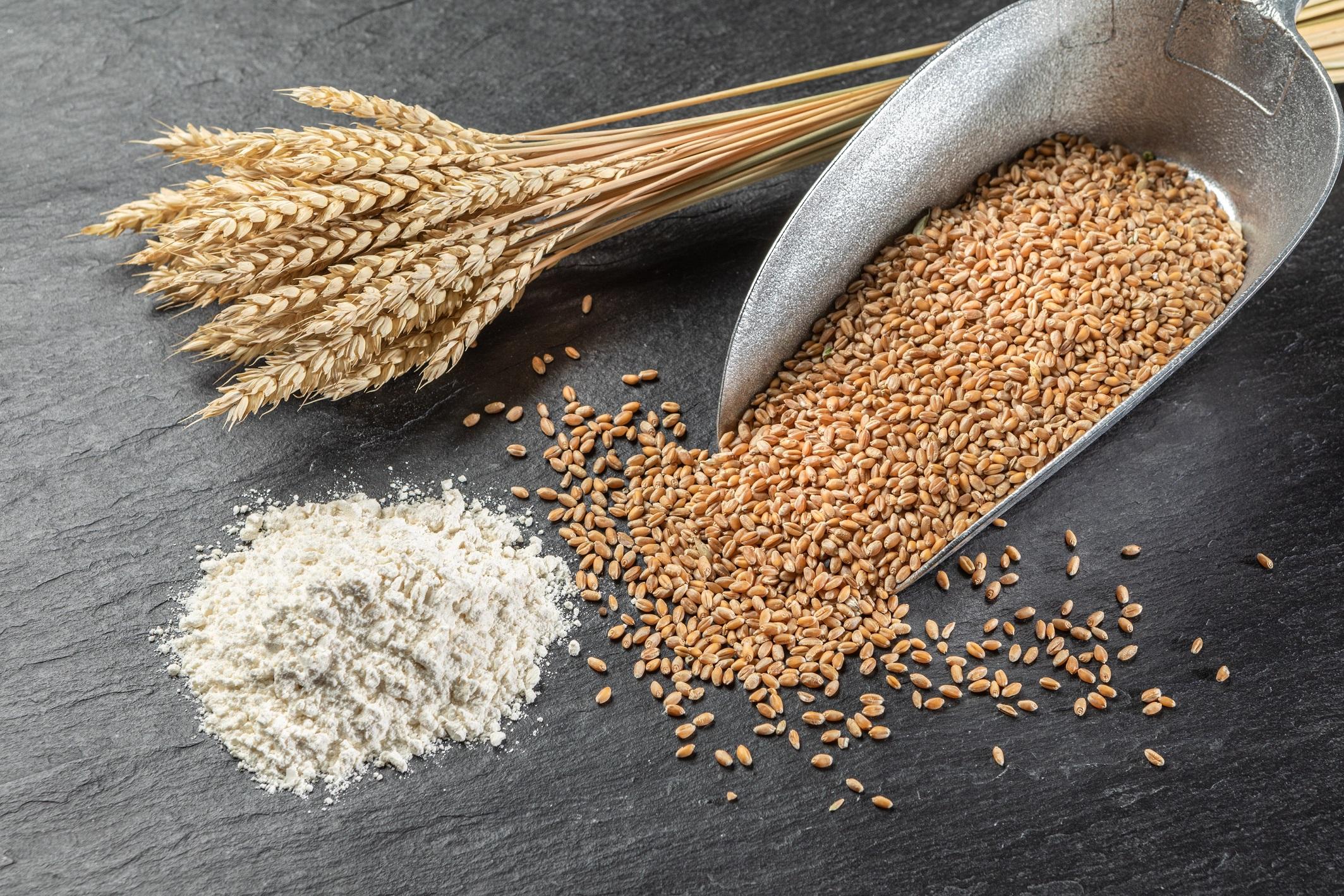 Bio-Premium Weizenmehle